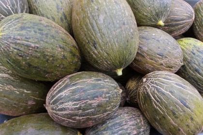 Melones medianos (8 uds)