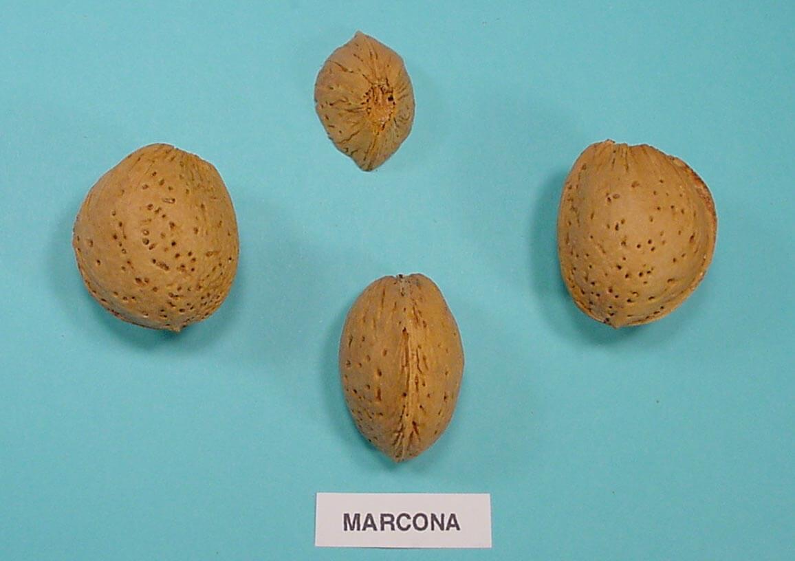 Almendras MARCONA