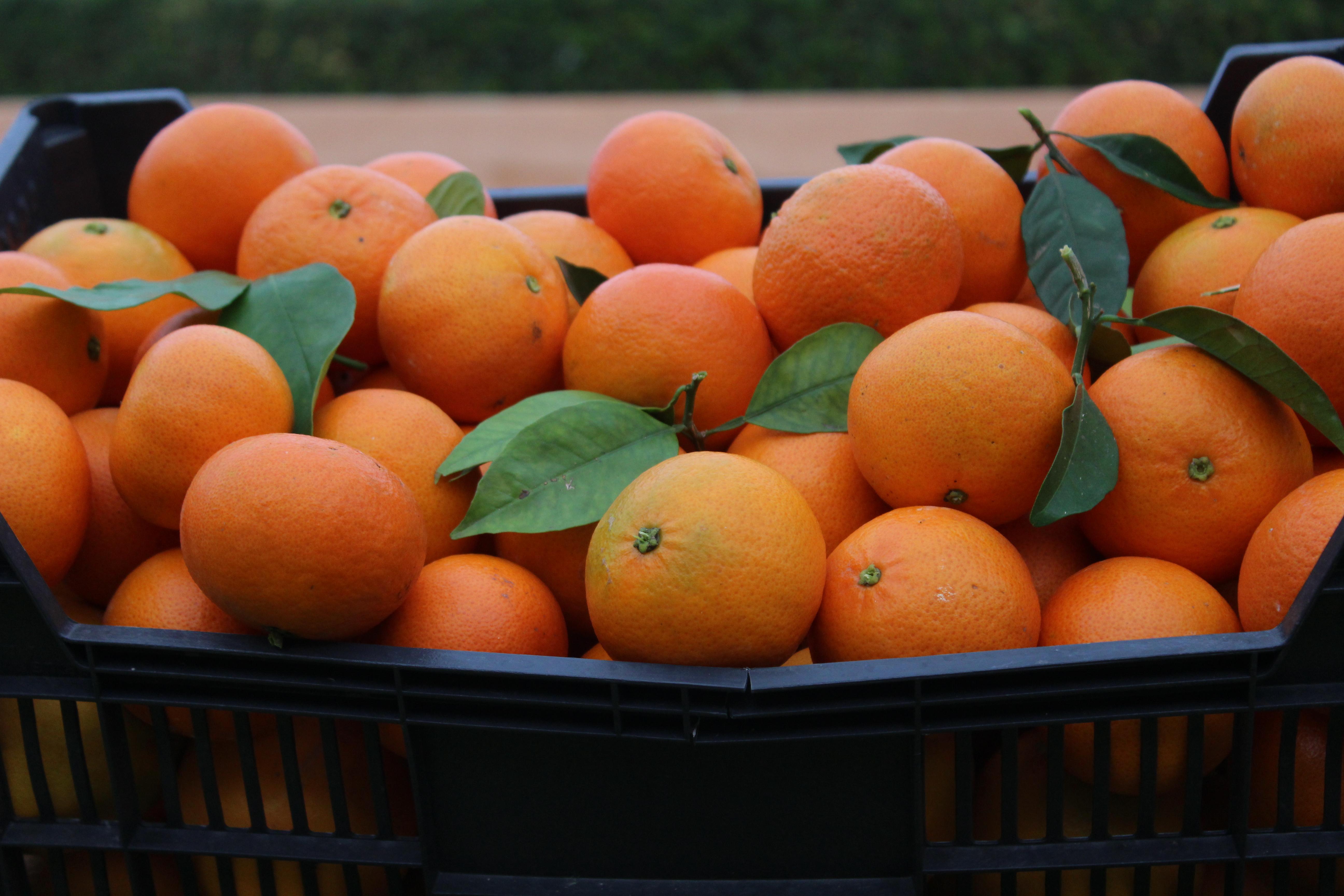 Mandarina Clemenvilla 15kg