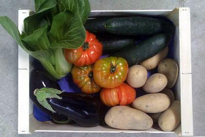 Cesta 4,5 Kg verduras ecológicas