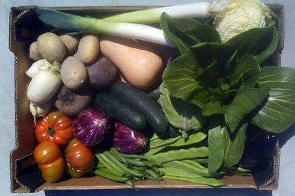 Pack Organic vegetables box 10 K