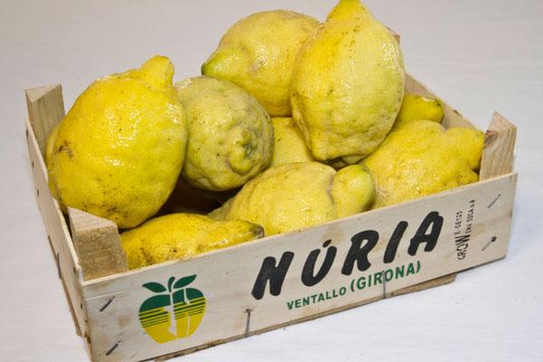 Limones ecológicos Girona