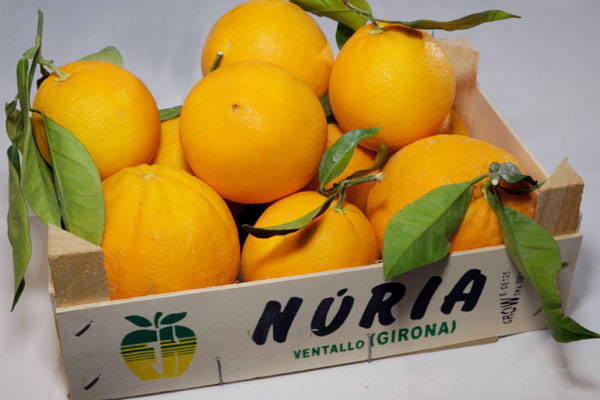 Naranjas ecológicas navelinas Girona