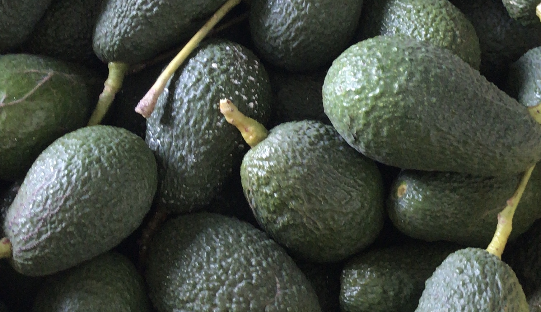 Aguacates Bio@guacatal Hass (ECO certificado CAAE)