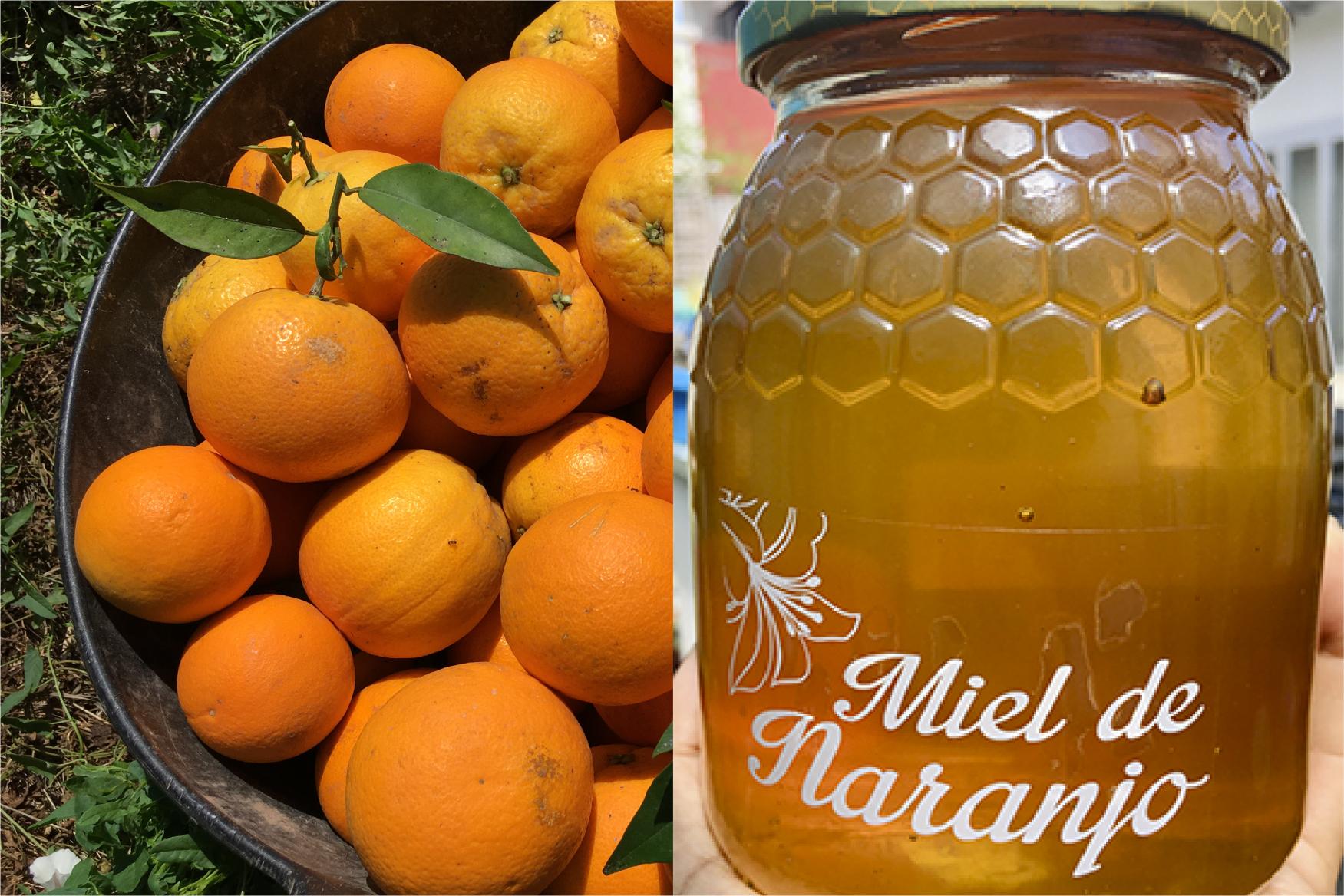 Caja Naranjas y Miel (10KG)
