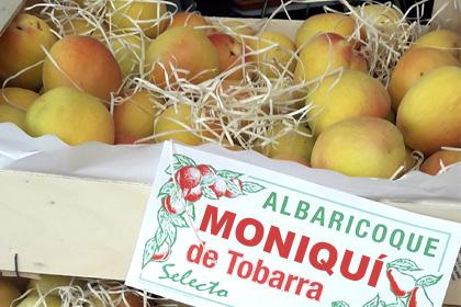Albaricoques al mayor - Moniquí