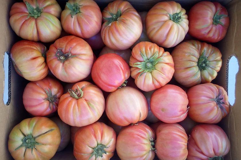 Tomates ecológicos rosa