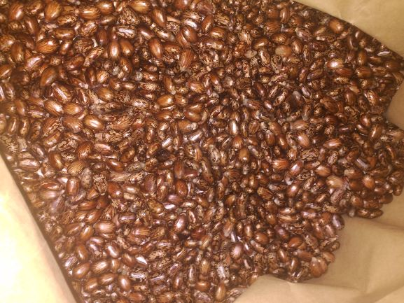 semilla de ricino