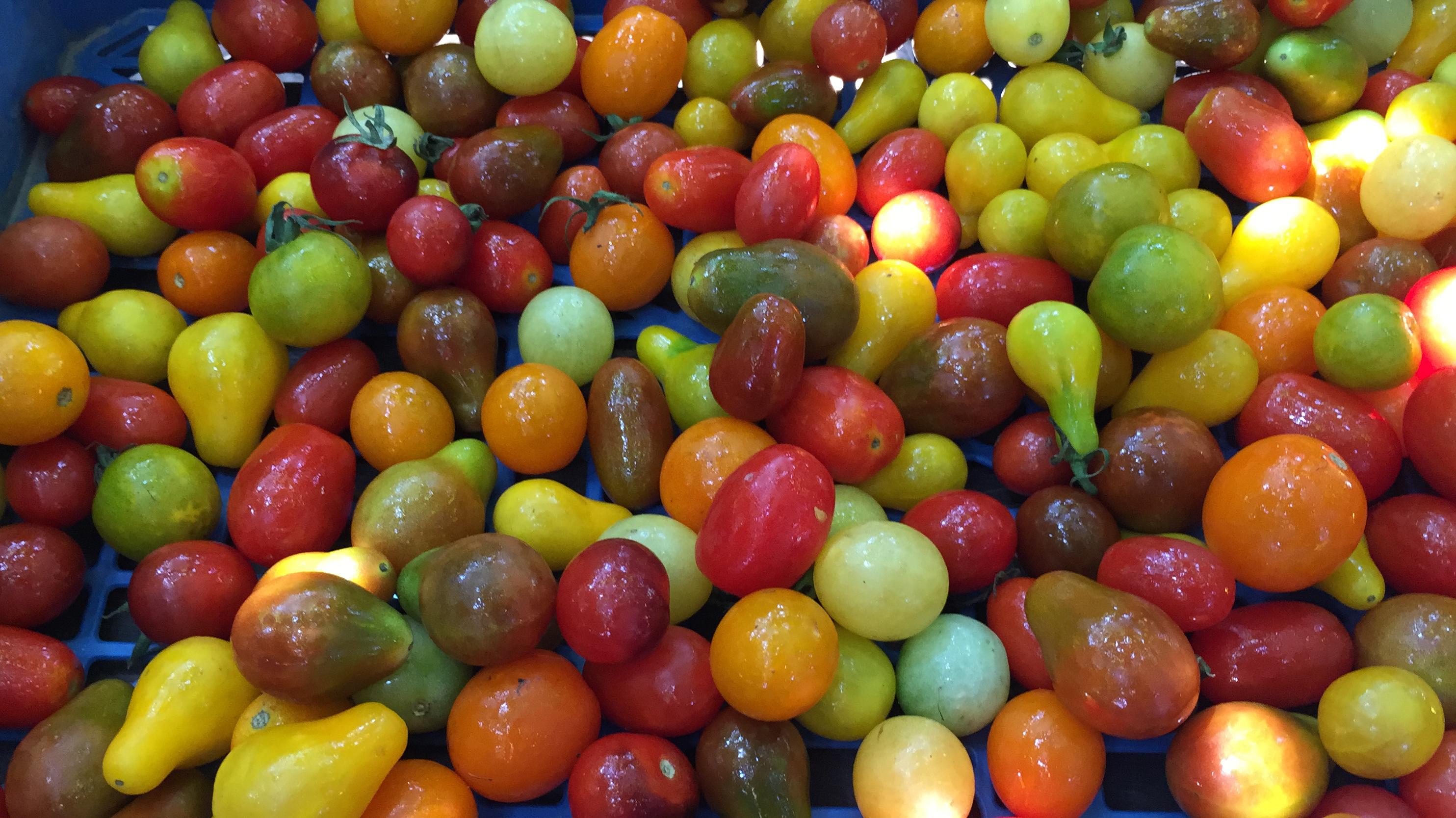 Tomates Cherry de colores