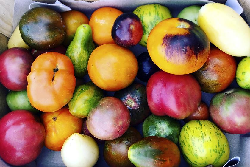 Tomates de colores, Medianos, 3Kg.