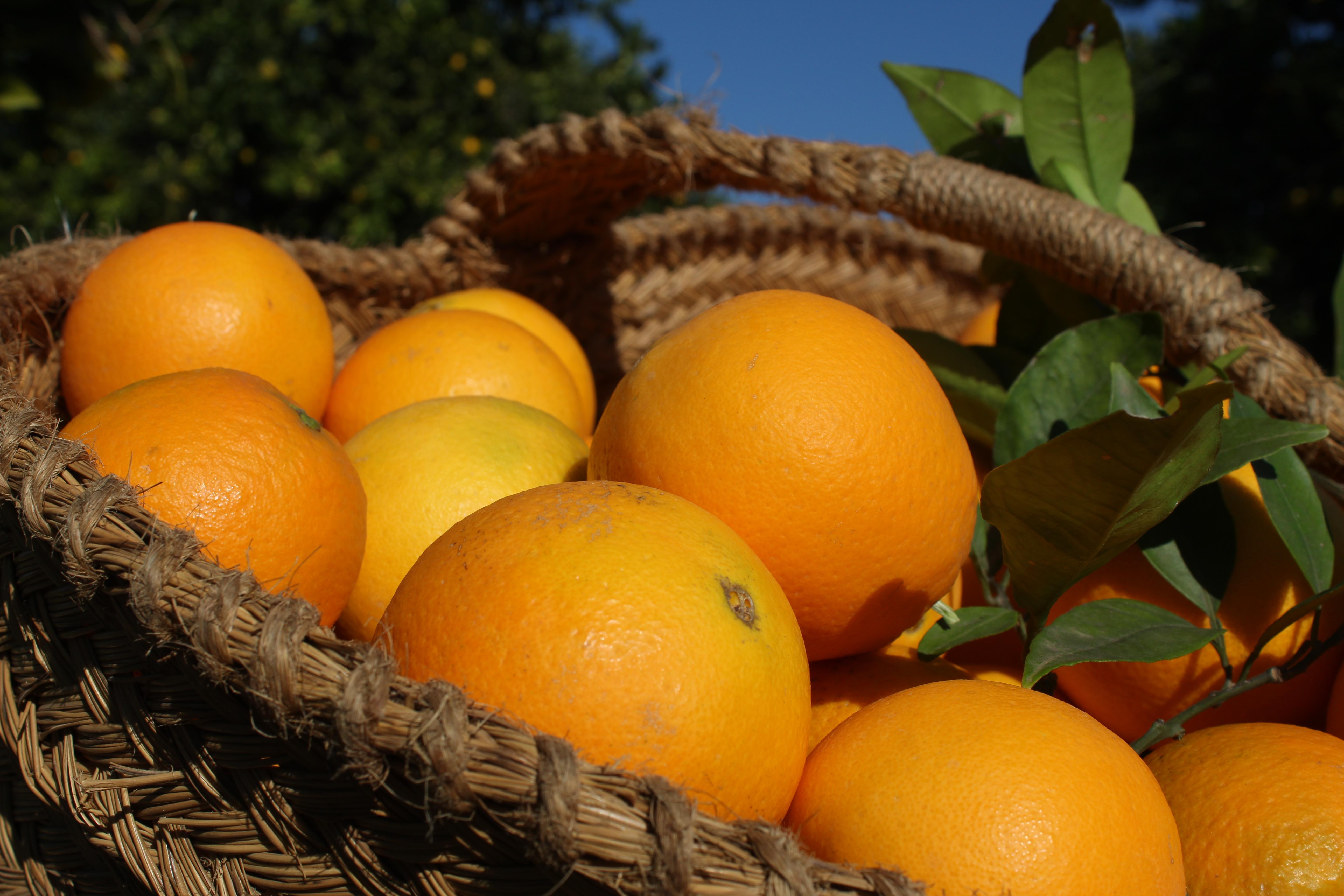 Naranja de Valencia 5kg