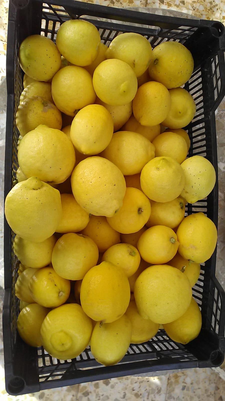 Limón eco