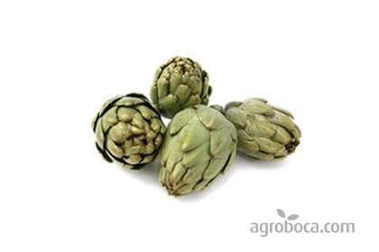 Alcachofas ecològicas