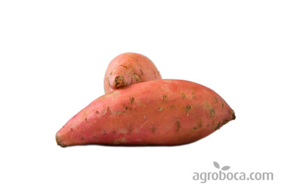 Organic sweet potatoe, Beauregard