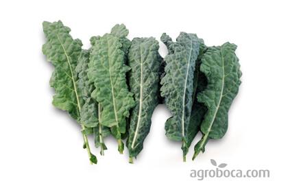 Col Kale ecológica