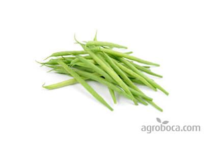 Organic green beans round
