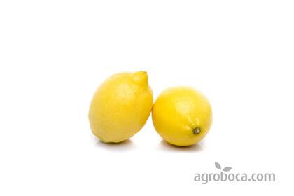 Limón ECO (1/2 Kg)