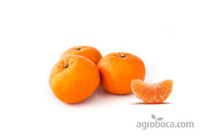 Mandarinas Ortanique ECO  - Caja 9kg
