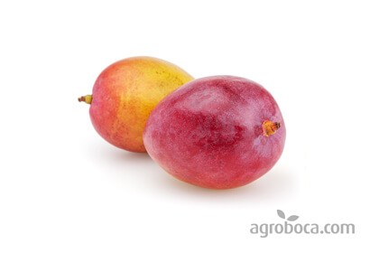 Oferta Mangos ecológicos