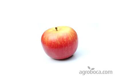 Manzana bicolor ecológica ECO