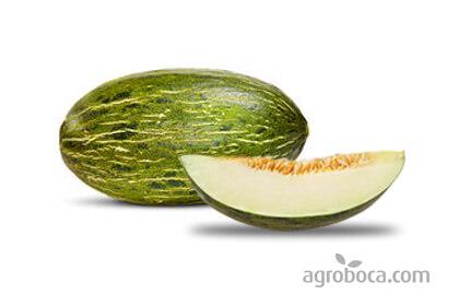 Melon piel de sapo ecológico