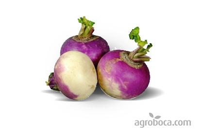 Nabos violetas ecológicos