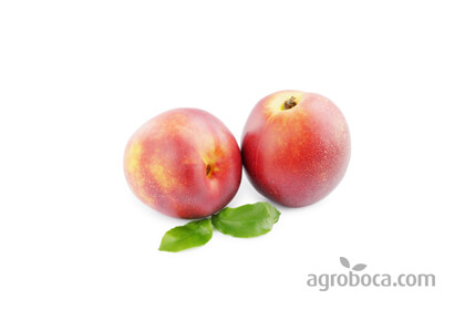 Nectarines ecològiques