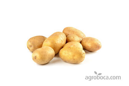 Patatas ecológicas al mayor