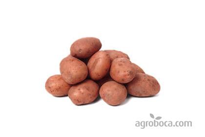 Patata roja ECO (1/2 kg)