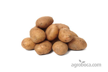 Patata agria ecológica
