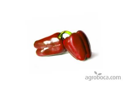 Pimientos rojos ecológicos