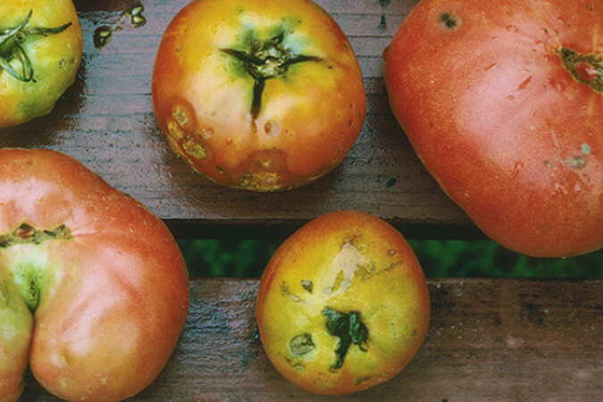 frutas feas oferta
