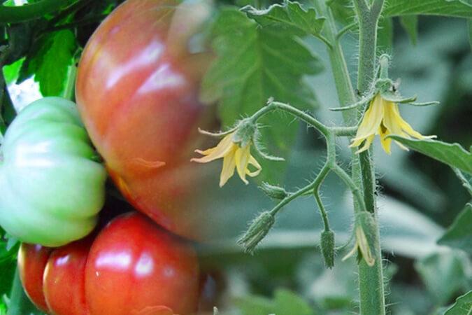 verduras de mercado