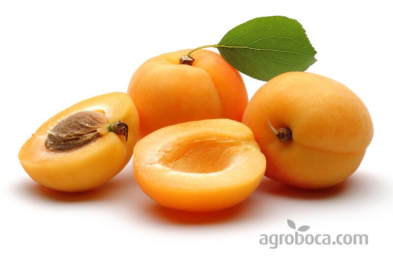 fruta del albaricoque con hueso