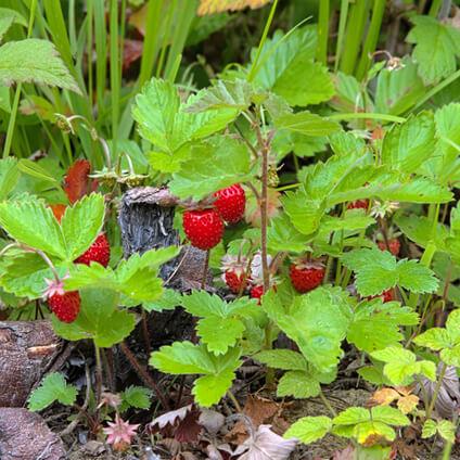 Qué son las fresas. Tipos de fresas y fesones