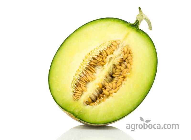 Pulpa y pepitas del melón