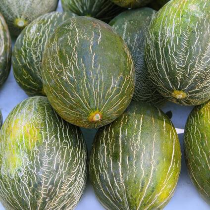 Sobre el melón y su cultivo