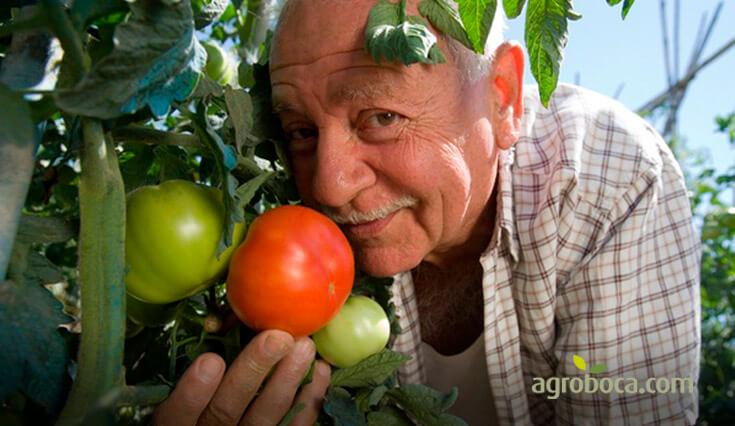 frutas y verduras frescas online