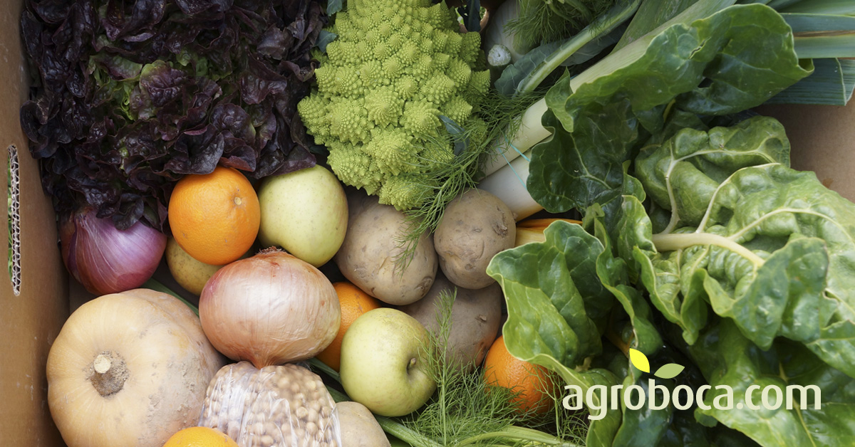 Oferta semanal de fruta y verdura ecológica a domicilio