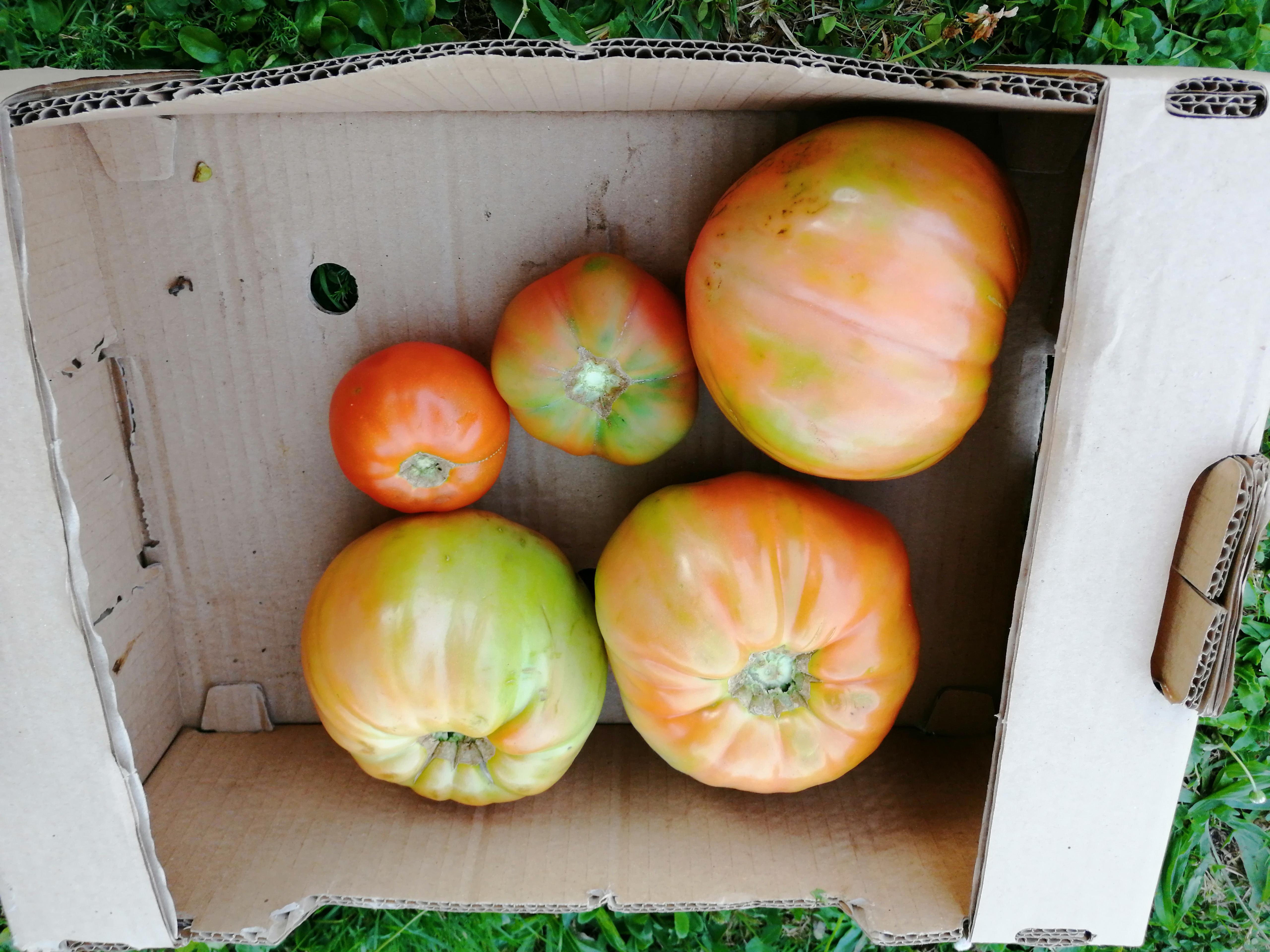 Tomates ensalada de Galicia (1 KG)