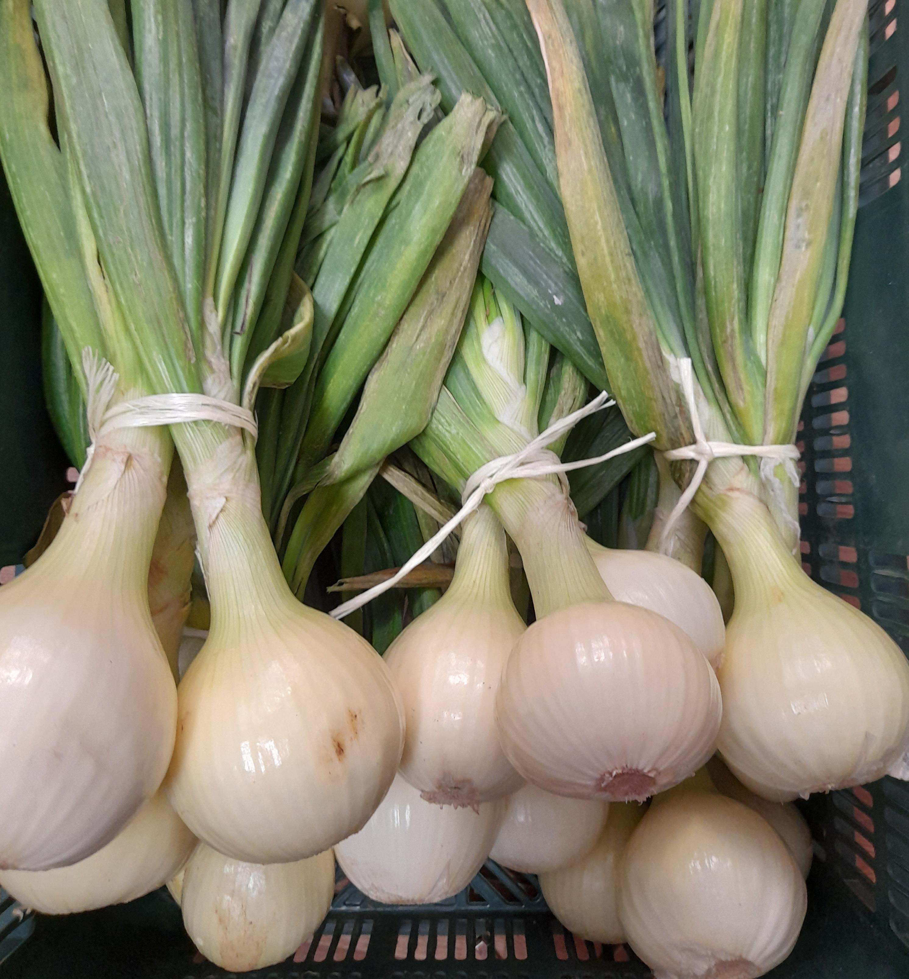Cebolla Fresca Manojo