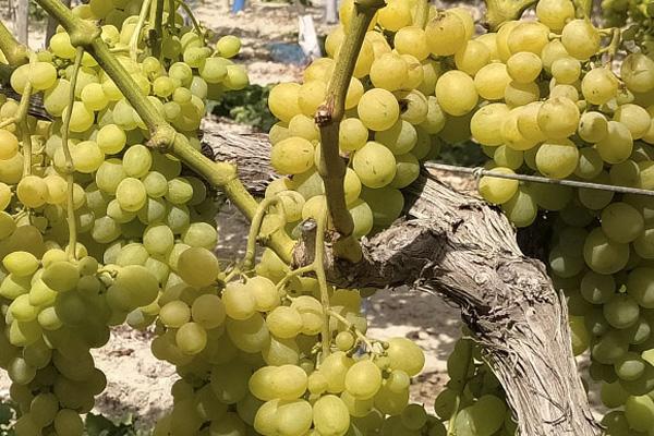 Frutas Maria jesus
