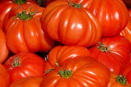 Tomates maduros ensalada