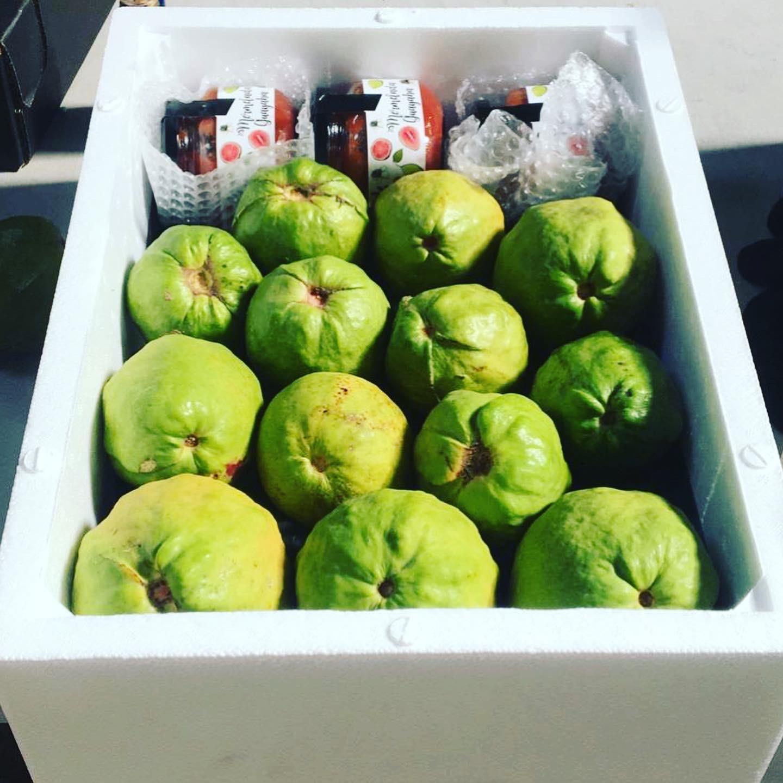 Caja De 3kg - Guayaba Rosa