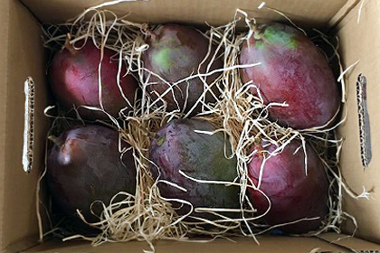 8 Kg Mango Eco reconversion