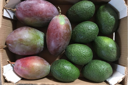 Pack tropical Mango + Aguacate