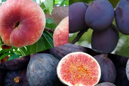 Figues, Prunes, Paraguaios, 9Kg