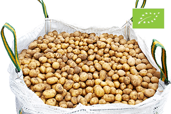 Organic potatoes Big Bags