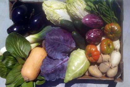 Cesta 12 Kg verduras ecológicas