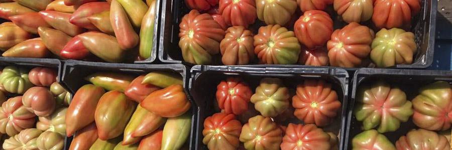 https://www.agroboca.com/productor/fruites-nuria/productos
